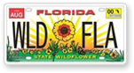 Florida State Wildflower License Plate